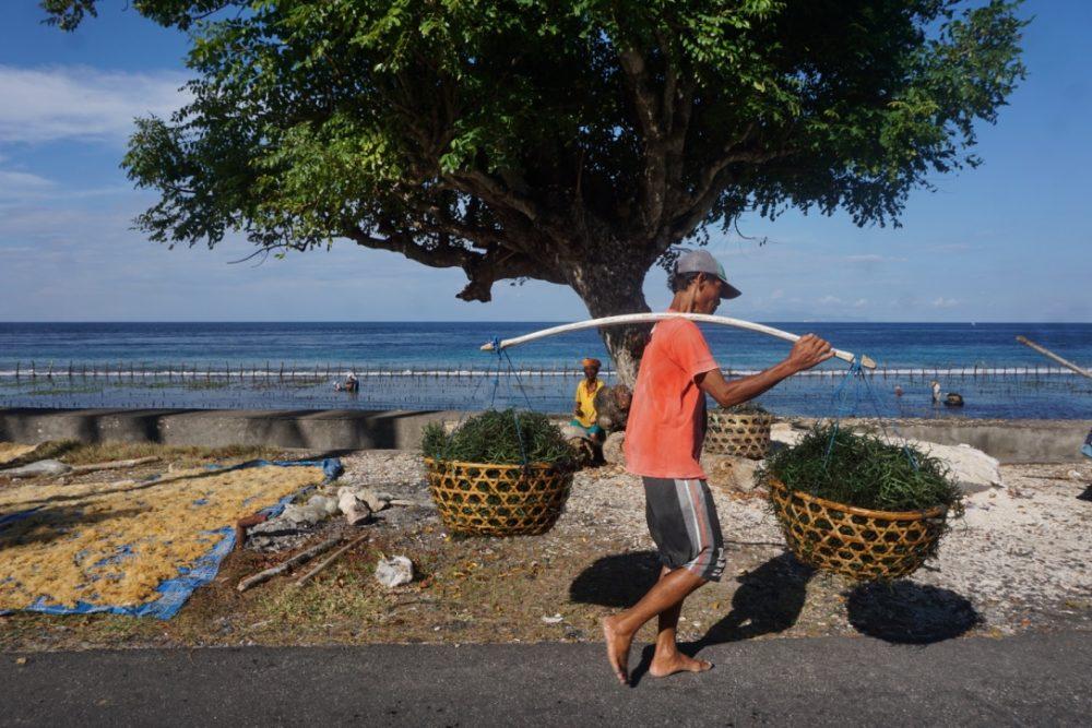 Geliat di Nusa Penida